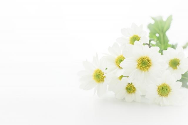 高根沢町・宇都宮市における家族葬の費用